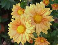 Floristería Margarita Milenium - Flores Amarillas